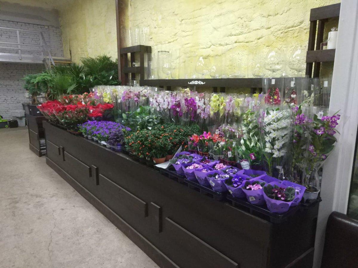 Цветы с оптовой базы как дома